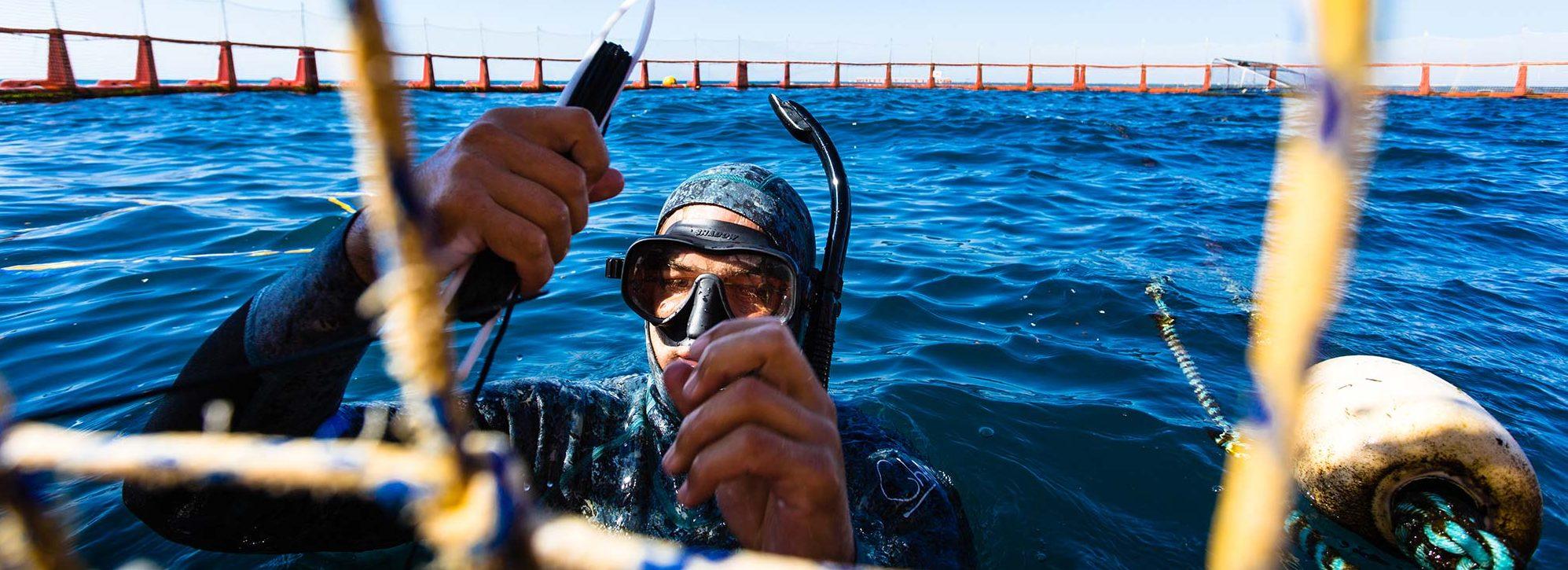 Quality - Australian Fishing Enterprises