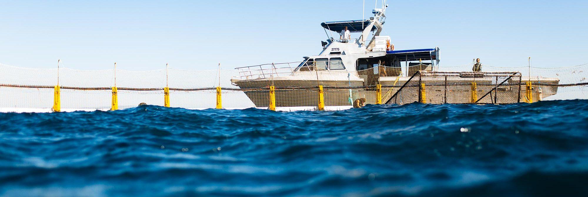 Sustainability - - Australian Fishing Enterprises